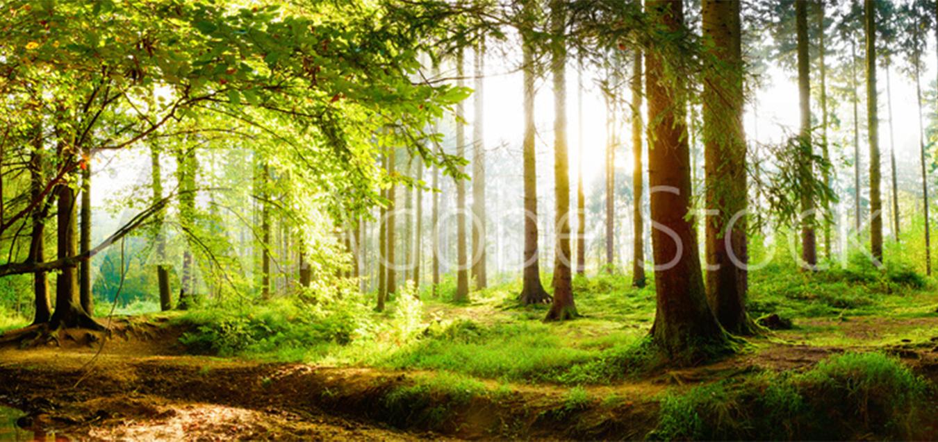 森と水と人が共生する環境創造のまちづくり